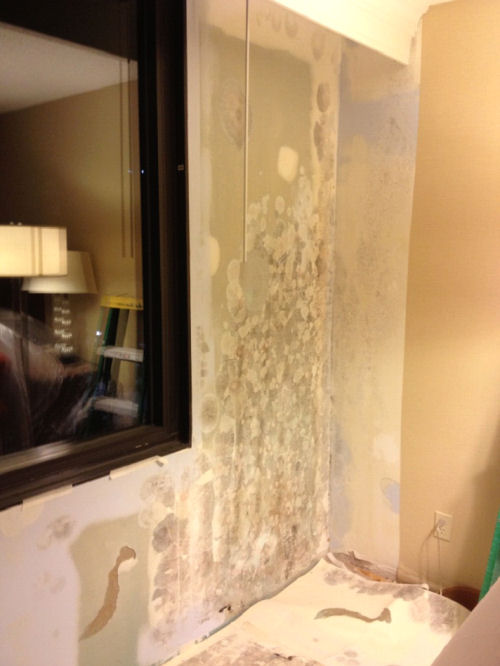 A view showing the damage existing under the vinyl wallcovering